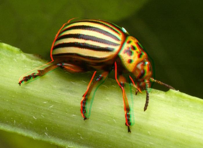 3D Bugs1