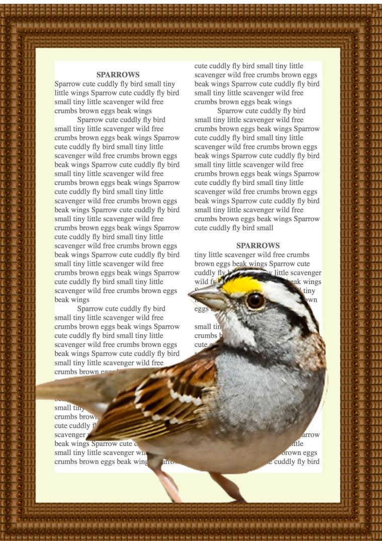 Classroom Word Bank Sparrow - TSERLIN.COM